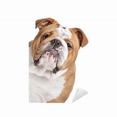 bulldog sticker pixers 174 we live to change