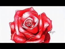 desenhando uma rosa vermelha desenho acelerado drawing
