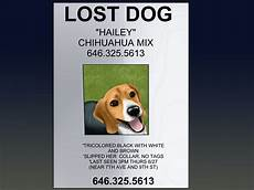 Lost Dog Poster Maker How To Make An Effective Missing Pet Poster With Pictures