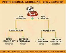 Labrador Puppy Food Chart India 1 Month Labrador Puppy Food Chart Dogs Breeds And