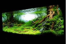 amano aquascape which finnex light for 22g the planted tank forum