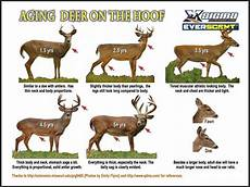 Deer Antler Age Chart How To Visually Age A Whitetail Deer Hunting