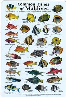 Reef Fish Identification Chart Divers Identification Fish Books Books On Fish For Divers
