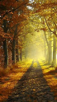 Iphone Wallpaper Fall Hd by Autumn Morning Iphone 6 Wallpapers Iphone Wallpapers