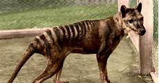 Lupo Lights Australia Scientists Were Convinced This Animal Was Extinct Now