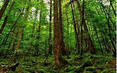 Rainforest Background Rainforest Background 183 Download Free Beautiful Full Hd