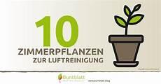 zimmerpflanzen luftreiniger 10 zimmerpflanzen zur luftreinigung