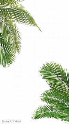 Tree Designs Tumblr Palm Tree And White Wallpaper Free Download For Iphone