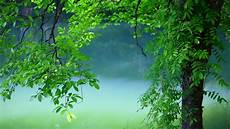 Nature Summer 4k Wallpaper by Tree Leaves Summer Hd Nature 4k Wallpapers Images