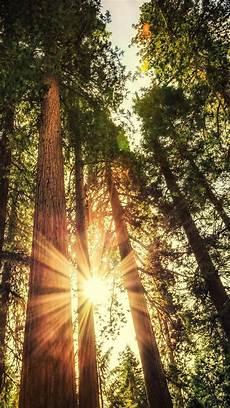 4k ultra hd nature wallpaper for mobile wallpaper forest 5k 4k wallpaper trees sunlight