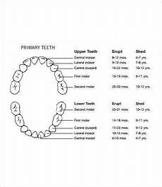 Printable Tooth Chart That Are Impertinent Carroll S Blog
