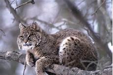 Wildlife Major Wildlife Ecology Major Forest And Wildlife Ecology