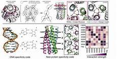 Institute For Protein Design De Novo Design Of Protein Oligomers With Modular