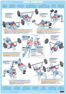 Free Weight Training Chart Chartex Chest Muscles Weight Training Chart Chartex Ltd