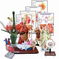 Educational Charts Manufacturers In India Laboratory Scientific Equipments India Educational