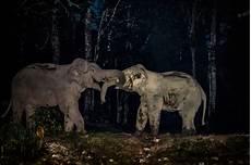 Malvorlage Indischer Elefant Elefanten