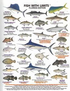 Florida Fish Id Chart Fish Chart Http Myfwc Com Wildlifehabitats Profiles