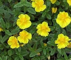 fiori di bach farmacia rock gocce orali 10 ml loacker fiori di bach