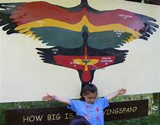 Bird Wingspan Chart Wingspan With Images Owl Blue Bird Bald Eagle