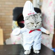 cat clothes for cat clothes for cats pet costumes suits