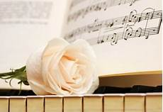 Flower Wallpaper Song by White Flowers Nature Background Wallpapers On