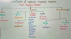 Classification Of Bacteria Chart Classification Of Medically Important Bacteria Based On