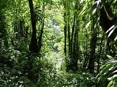 Rainforest Background Rainforest Backgrounds Wallpaper Cave