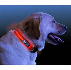 Dog Led Light Nite Dawg Led Light Up Dog Collar Small