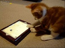 Cat Plays With Cartoon Mouse On iPad (gif)   LuvBat