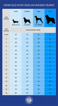 Puppy Age Chart How Old Is My Dog In Human Years Dog To Human Years Chart