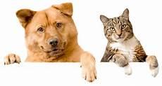 adoption fees pet adoption alternative of warren paaw