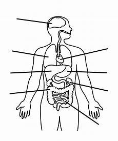 Blank Body Chart Human Body Outline Printable Clipart Best