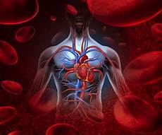 Circulatory System Organs Organs Of Circulatory System And Their Functions New