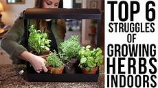 Basil Grow Light Top 6 Struggles Of Growing Herbs Indoors W Solutions