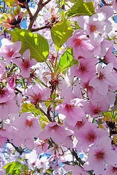 flower arrangements iphone wallpaper pink flower tree iphone 3gs wallpapers free 640x960 hd