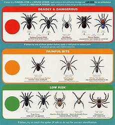 Oklahoma Spiders Identification Chart All Over Pest Management Sydney Wollongong Termites