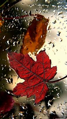 Iphone 8 Wallpaper Fall by 481 Best Wallpaper Iphone Autumn Images On