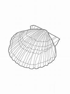 Printable Pictures Of Seashells Free Printable Seashell Coloring Pages For Kids Coloring