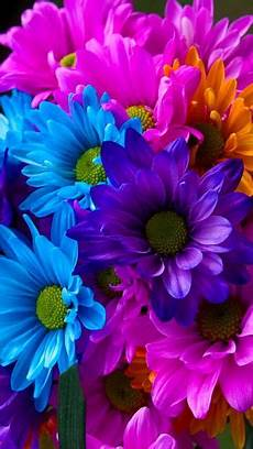 Flower Cell Phone Wallpaper by 360x640 171 Colorful Flowers 187 Cell Phone Wallpaper