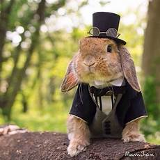 rabbit clothes for bunnies 19 best images about rabbit clothing on guinea