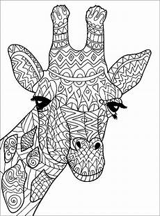 giraffe giraffes coloring pages