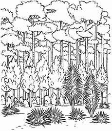 Ausmalbilder Erwachsene Wald Ausmalbilder Wald 01 Pintar Colorir E Vegeta 231 227 O