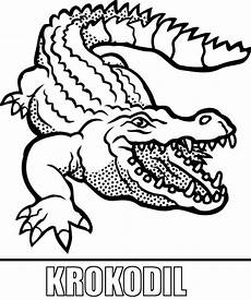 malvorlage krokodil