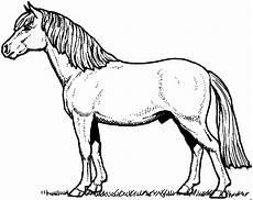 schoenes pony ausmalbild malvorlage tiere