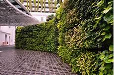 Vertical Green Plante Green Wall Vertical Garden Wallspan