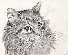 Cat Drawing Images 40 Great Examples Of Cute And Majestic Cat Drawings