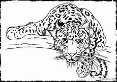 realistic animal coloring pages at getcolorings