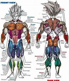 Full Body Anatomy Chart Saiyan Anatomy Chart Dragon Ball Dragon Ball Z Goku