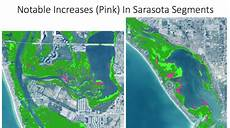 seagrass beds appear on navigational charts in sarasota bay found to have its largest seagrass acreage
