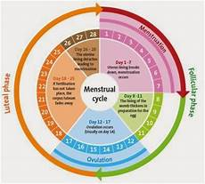 24 Day Menstrual Cycle Chart Pregnancy Guide Best Time To Get